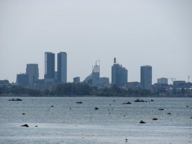 Высокія будынкі ў Таліне і мора